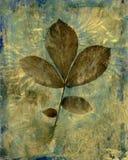 Bladeren op Tak Royalty-vrije Stock Afbeeldingen
