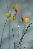 Bladeren op takken Royalty-vrije Stock Foto's