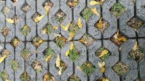 Bladeren op vloer Royalty-vrije Stock Fotografie
