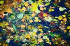Bladeren op Water Royalty-vrije Stock Fotografie