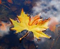 Bladeren op water Royalty-vrije Stock Afbeeldingen