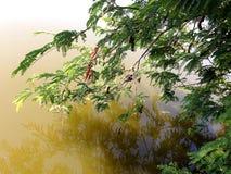Bladeren op Water Stock Afbeeldingen