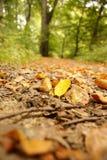 Bladeren op weg stock foto