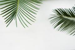 Bladeren op witte achtergrond De banner van de zomer Royalty-vrije Stock Afbeelding