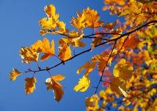 Bladeren over hemel Stock Afbeelding