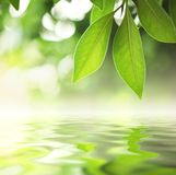 Bladeren over water Royalty-vrije Stock Foto's