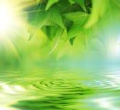Bladeren over water Stock Afbeelding