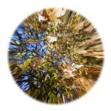 Bladeren over water en nagedacht in het water royalty-vrije stock foto