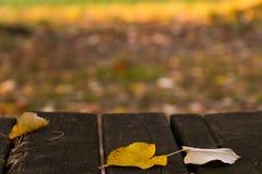 Bladeren, park, vroege daling Royalty-vrije Stock Afbeelding