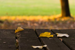 Bladeren, park, vroege daling Royalty-vrije Stock Foto's