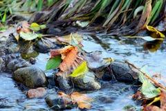 Bladeren in rivier Stock Foto
