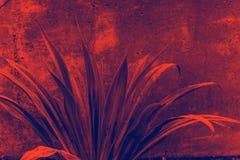 Bladeren in rood worden gekleurd die en blauw Stock Afbeelding