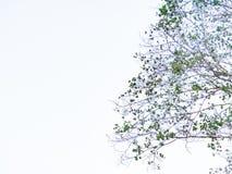 Bladeren` s boom Royalty-vrije Stock Foto's