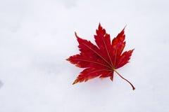 Bladeren in sneeuw Stock Foto