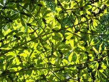 Bladeren in The Sun Stock Foto's