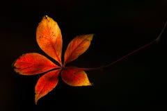 Bladeren in The Sun Royalty-vrije Stock Afbeeldingen