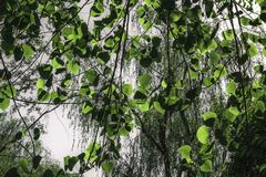 Bladeren in The Sun stock afbeeldingen