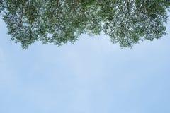 Bladeren tegen de blauwe hemel Stock Fotografie