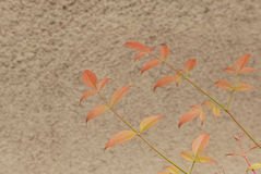 Bladeren tegen de muur Royalty-vrije Stock Foto's