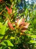 Bladeren in tuin stock fotografie