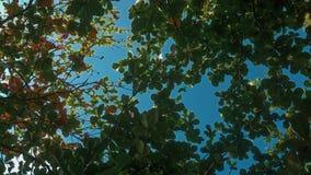 Bladeren vóór de herfst royalty-vrije stock afbeeldingen
