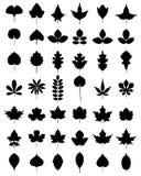 Bladeren van bomen Royalty-vrije Stock Afbeeldingen