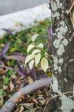 Bladeren van boom Stock Foto