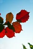 Bladeren van boom in intensief licht royalty-vrije stock afbeelding