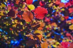 Bladeren van boom in intensief licht stock foto's