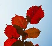Bladeren van boom in intensief licht stock foto