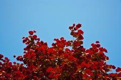 Bladeren van boom in intensief licht royalty-vrije stock foto