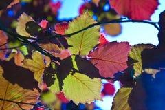 Bladeren van boom in intensief licht royalty-vrije stock foto's