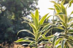 Bladeren van boom in lentetijd, abstract blad Royalty-vrije Stock Afbeelding