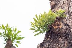 Bladeren van boom in lentetijd, abstract blad Royalty-vrije Stock Fotografie