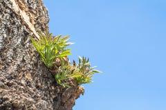 Bladeren van boom in lentetijd, abstract blad Stock Afbeeldingen