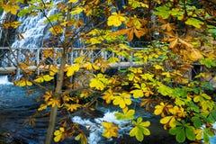 Bladeren van daling op water Stock Fotografie