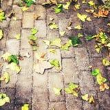 Bladeren van de dalings de gele herfst op grond stock foto