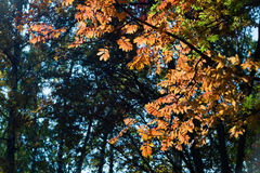 Bladeren van de de herfst de rode lijsterbes op groene aardachtergrond Stock Afbeeldingen