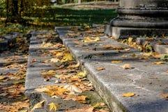 Bladeren van de esdoorn de gele herfst op de treden in het Park stock foto's