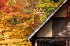 Bladeren van de esdoornbomen van de blokhuisherfst de rode Stock Afbeeldingen