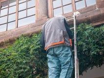 Bladeren van de mensen de scherpe klimplant Stock Afbeelding
