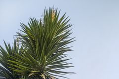 Bladeren van de palm in de hemel royalty-vrije stock foto's