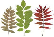 Bladeren van diverse bloemen en bomen Stock Fotografie