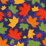 Bladeren van een esdoorn op donkerblauw. Stock Afbeeldingen