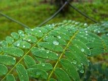 Bladeren van een installatie met regendruppels wordt behandeld die royalty-vrije stock fotografie