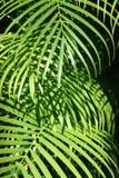 Bladeren van een palm. Royalty-vrije Stock Foto's