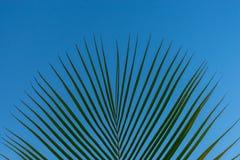 Bladeren van een strandpalm tegen een blauwe hemel wordt geplaatst die Stock Fotografie