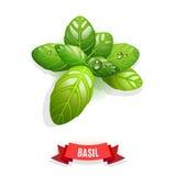 Bladeren van Genovese-basilicum, Thais basilicum, citroenbasilicum of heilig basilicum Op witte achtergrond Kruid met waterdaling vector illustratie
