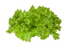 Bladeren van groene verse lettucel. Stock Afbeelding