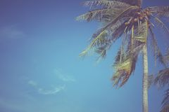 Bladeren van kokosnoot op een blauwe hemelachtergrond Royalty-vrije Stock Afbeeldingen